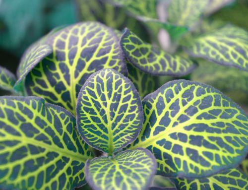 Pro krásné pokojové rostliny bez mušek!